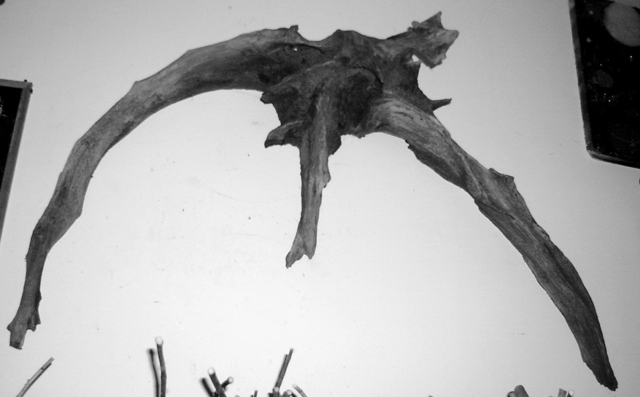 Flying Driftwood Dragon